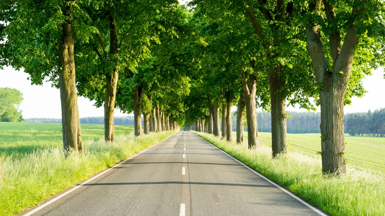 Bäume gibt es an vielen Kreisstraßen